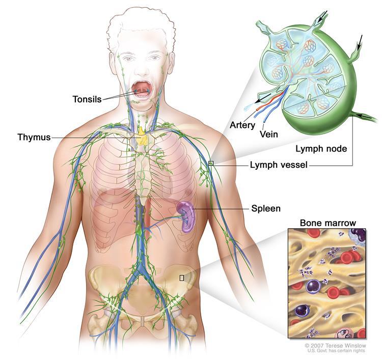 Lymphoma Treatment